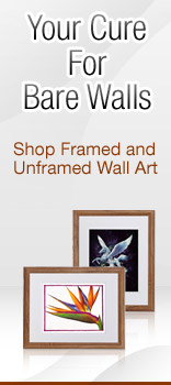 Shop Framed and Unframed Wall Art