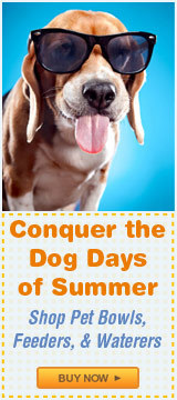 Conquer the Dog Days of Summer