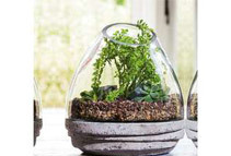 Glass Plant Terrariums (6 Shapes / Sizes)